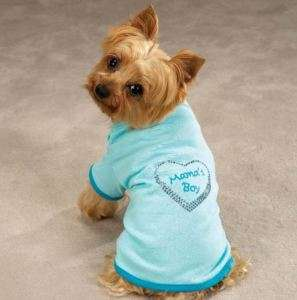 Mamas Boy Blue Dog Tee T Shirt Top Zack & Zoey NEW