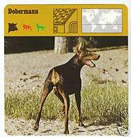 DOBERMANN DOBERMAN PINSCHER DOG Picture CARD Breed