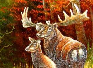 Stretched Wild Animal Oil Painting White Tailed Deer