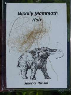 Specimen Of Woolly Mammoth Hair From The Permafrost Of Siberia