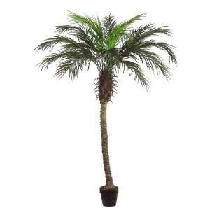 6 Areca Palm Tree in Black Plastic Pot Green (Pack of 2