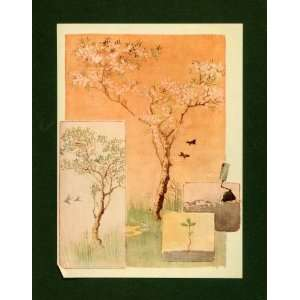 1913 Tipped In Print Seed Japanese Cherry Blossom Tree Botanical