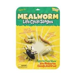 Insect Lore Life Cycle Stages Mealworm; 3 Items/Order