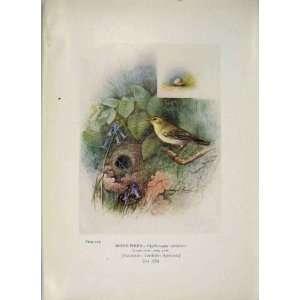 Wood Wren Bird Egg Colour Antique Old Print Fine Art