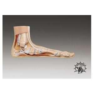 Deluxe Foot Model Series   Flat  Industrial & Scientific